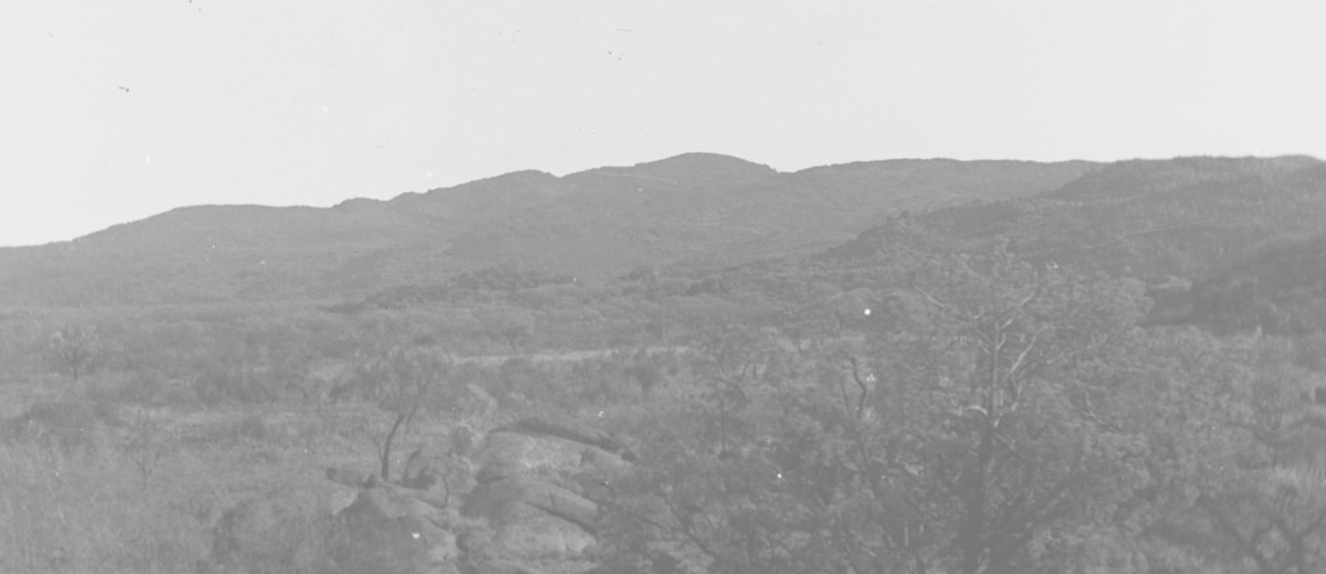 Image: Black and white photograph of mountain covered in native Australian vegetation with small rock outcrop in foreground