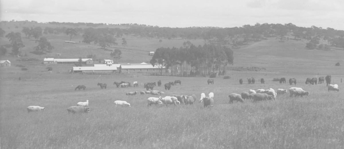 Image: Several horses and sheep graze in a paddock of tall grass. A cluster of buildings are visible in the distant background