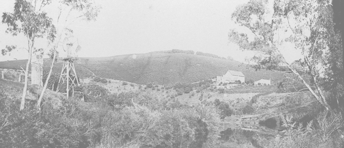 Image: A body of water with buildings set behind it in the foreground, a sprawling vineyard on a hill in the background