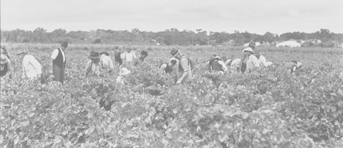 Image: people in vineyard