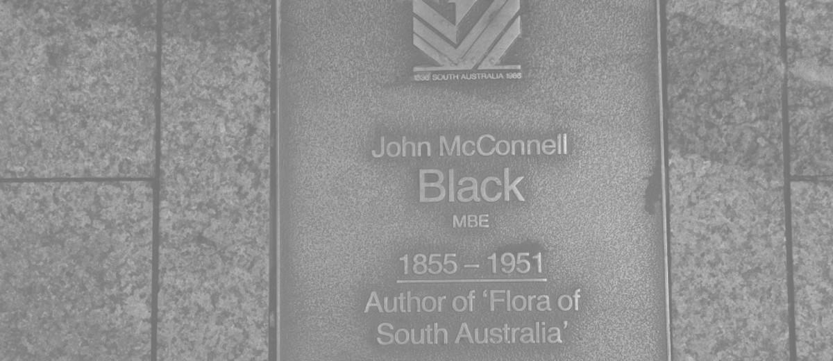Image: John McConnell Black