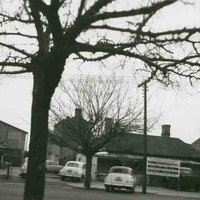 Image: a large, leafless tree dominates the photograph. Behind are single storey cottages and large warehouses and commercial buildings. A number of 1950s era cars can also be seen.