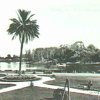 Image: A large palm tree surrounded by flowers, paths and lawns stands on the bank of a lake. In the foreground a man can be seen sitting on a park bench whilst in the background a low bridge can be seen crossing the lake.