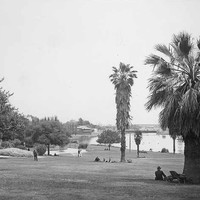 Image: a number of groups of people in 1950s clothing stroll through parklands or sit in the shade of trees by a lake.