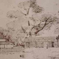 Image: section of a sketch showing house and wooden outbuildings set among large gum trees