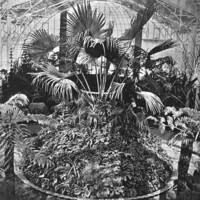 Image: Palms and tropical plants within a glasshouse