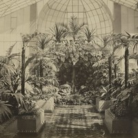 Image: tropical plants in a glasshouse, with stone grotto ornamentation