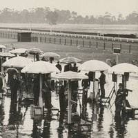 Image: crowd under umbrellas at race track