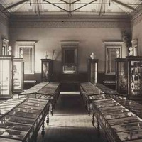Image: sepia photograph of a museum interior with a large number of wood and glass display cases and marble busts