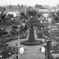 Image: A large, formal garden featuring several rose bushes, three palm trees, a gazebo and winding paths