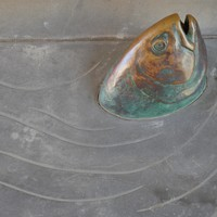 Image: Close up of fish swimming on pathway