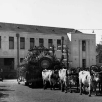 Image: floral float pulled by cattle in front of building
