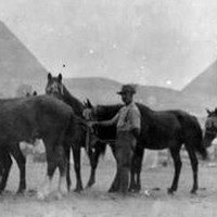 EGYPT,1915. Horses from an Australian Light Horse Unit waiting in line for attention  by a blacksmith.