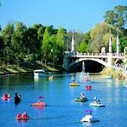 Image: a number of small coloured paddle boats and a larger white motorboat travel down a wide gentle river which passes through parklands and under a stone bridge.