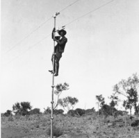 Image: A man holding onto a thin telegraph pole which he has just climbed, almost to the very top