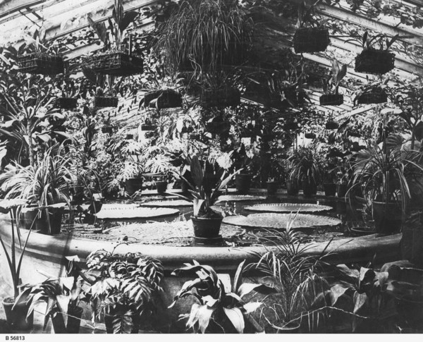 Image: Tropical plants in a glasshouse